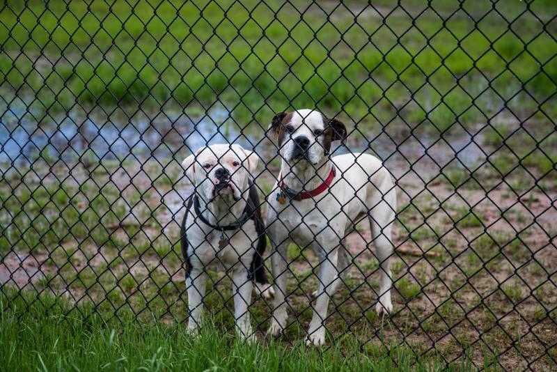 puppyren buiten