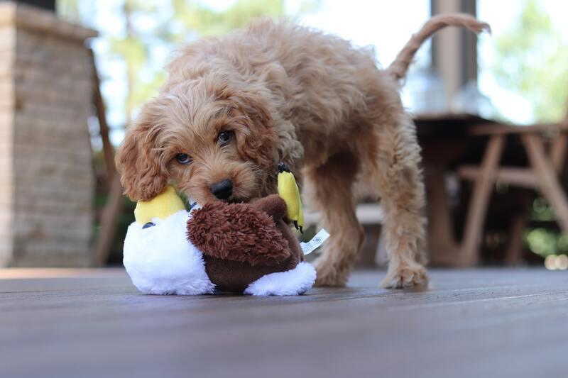 puppy speeltjes